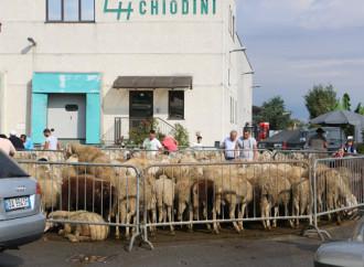 L'Islam avanza e pretende troppo sugli agnelli sgozzati