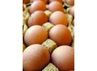 Uova contaminate: scandalo alimentare? No, una frode