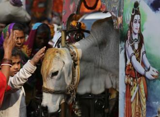 In India pene più severe per chi uccide una mucca